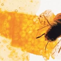 Το Πολυχρηστικό Μέλι